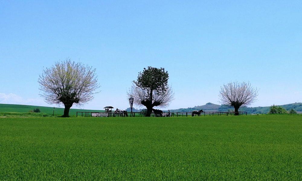 l'area attrezzata attorno al Bialbero di Casorzo