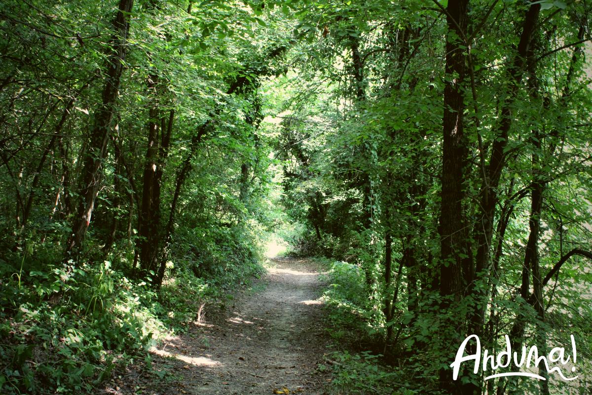 sentiero nel bosco sulle colline del Monferrato