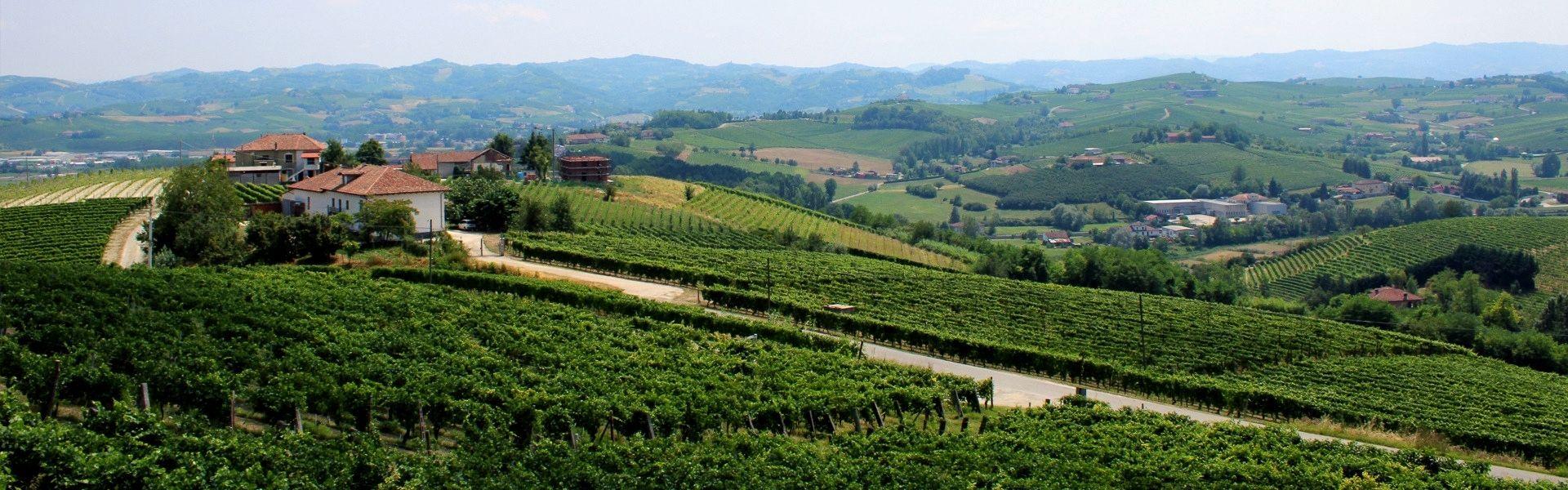 vigneti sulle colline del monferrato