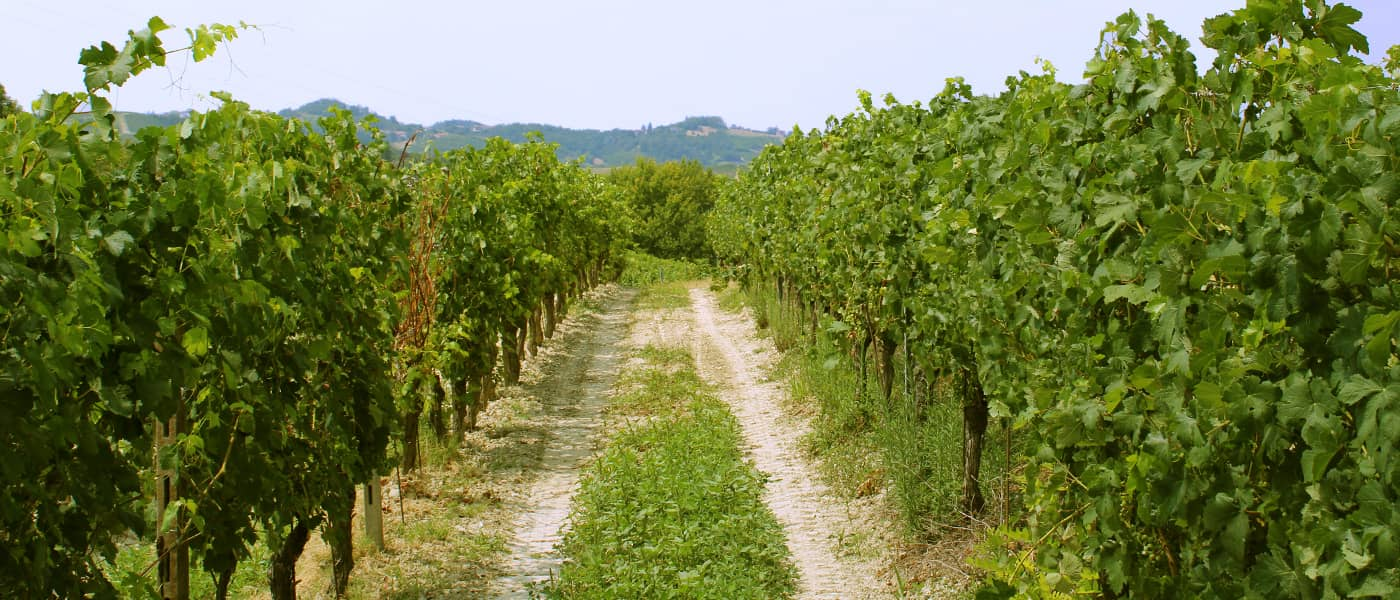 vino grignolino monferace