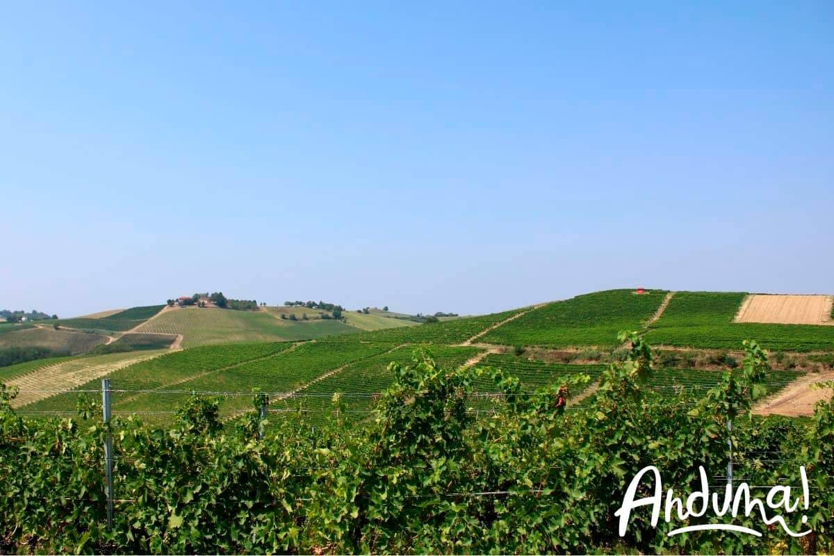 vigneti di ruché sulle colline di castagnole monferrato